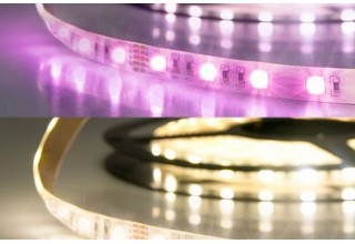 RGB+WW LED Band mit 19,0...